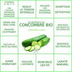 Les bienfaits du Concombre | LE CONCOMBRE Le Monde s'Eveille Grâce à Nous Tous ♥