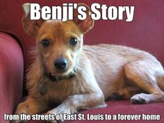 Benjis story - Letting Benji Go #dogrescue #dogs