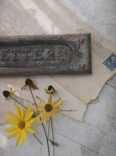 Rustic Victorian Mail Slot. Door Slot. Salvage by 3vintagehearts