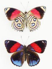 All Butterflies