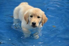 Ready for a swim! www.superstarpetservices.com