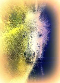 the Great Goat Gruff