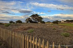 Point Pinos Lighthouse and Pacific Grove Golf Course - Pacific Grove, CA 93950 - Mark Bruno Photography