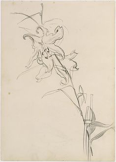 """John Singer Sargent, """"Lily, Study for 'Carnation, Lily, Lily, Rose'"""" Graphite, pen,  ink on off-white wove paper."""