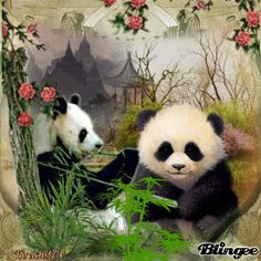 Pandas lassen es sich schmecken Animals Images, Animals And Pets, Baby Animals, Funny Animals, Cute Animals, Chinese Artwork, Chinese Painting, Teddy Bear Cartoon, Teddy Bears