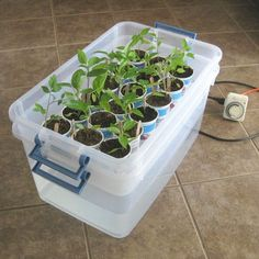 This system will save you a lot of time watering your transplants.Self Watering Tray DIY