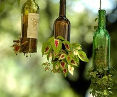Wine bottle planters - so fun. Gives me something to do with all those empty wine bottles :P
