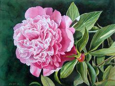 Pink Peony in watercolor by Doris Joa