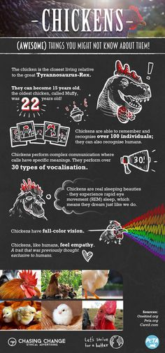 Do you know these surprising facts about chickens? Chickens are smart and complex beings that can think and feel things just like people. Please make the compassionate choice to go vegan <3.