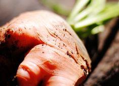 Cum se cultiva castraveti din rasaduri - magazinul de acasă Turkey, Plant, Peru