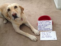 Is bread bad for dogs