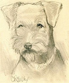 Pet pencil art, Artist Bill Cowley