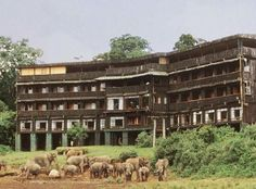 Serena Mountain Lodge - Cheetah Safari Kenya ...... Also, Go to RMR 4 awesome news!! ...  RMR4 INTERNATIONAL.INFO  ... Register for our Product Line Showcase Webinar  at:  www.rmr4international.info/500_tasty_diabetic_recipes.htm    ... Don't miss it!