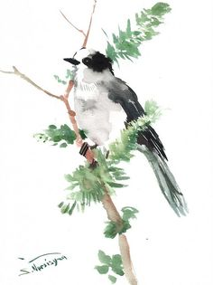 Gray Jay Original watercolor painting forest birds by ORIGINALONLY