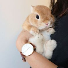 Find images and videos about love, cute and beautiful on We Heart It - the app to get lost in what you love. Cute Little Animals, Cute Funny Animals, Fluffy Animals, Animals And Pets, Cute Baby Bunnies, Bunny Care, Tier Fotos, Cute Animal Pictures, Cute Creatures