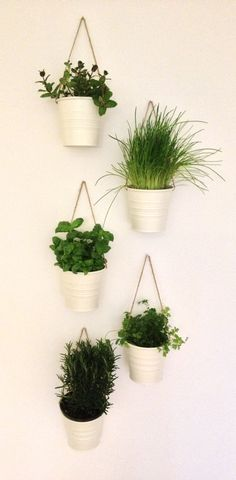 General purpose kitchen plants--use for herbs! Hang up along windowsill?!
