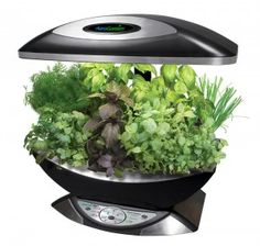 I love my AeroGarden! I have grown herbs, tomatoes, and flowers in mine. It is the perfect indoor garden! Hydroponic Farming, Aquaponics Greenhouse, Hydroponic Plants, Aquaponics Fish, Hydroponics System, Growing Herbs, Growing Vegetables, Water Plants, Garden Pots