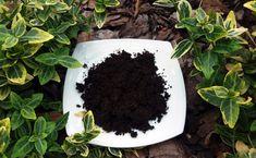 Fusy z kawy dla roślin. Jak i do czego je stosować, a na co uważać - E-ogródek Blackberry, Flora, Fruit, Grill, Gardening, Living Room, Compost, Lawn And Garden, Blackberries