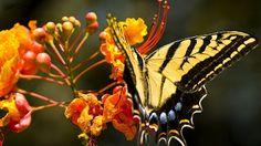 Butterfly Wallpapers | Desktop Wallpapers