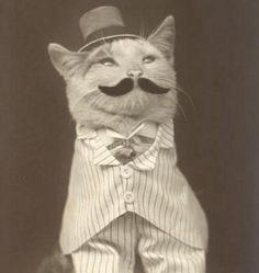 meow indeed