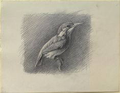 Ruskin, John - Study of a Kingfisher, with dominant Reference to Shade, 1871, pen and ink over graphite on wove paper© University of Oxford - Ashmolean Museum
