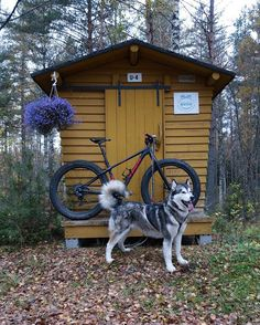 Treils with my girl... #trekbikes #trekfarley #trekfarley98 #fatbike #fatbikefinland #loves_mtb #cyclingshots #fatbike_29plus_life #fatbiking #suomenluonto #landscape #finnishnature #loves_bikes #singletracks #fatbikee #fatbikesneedlovetoo #fatbikemania #maitolaituri #alaskanmalamute #alakanmalamuutti #garconmalamutes
