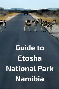 Travel tips for Etosha National Park in Africa.