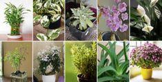 10 plantas que atraen energía positiva a tu hogar Selena Quintanilla, Sword Art Online, Ikebana, Feng Shui, Vegetable Garden, Aloe Vera, Cactus, Christmas Decorations, Backyard