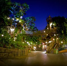 Always thought it'd be cool to live in this tree... Swiss Family Robinson Tree House, Magic Kingdom