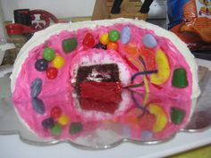 Science Project: 3D Edible Animal Cell cake.    GRADE: A+