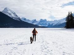 Ski Holidays with Dogs: Dog Friendly Chalets & Ski Resorts for Pets Dog Training Classes, Dog Training Tips, Dog Barking Video, Dog Friendly Cabins, Luxury Ski Holidays, International Waters, Dog Pee, Susa, Your Spirit Animal