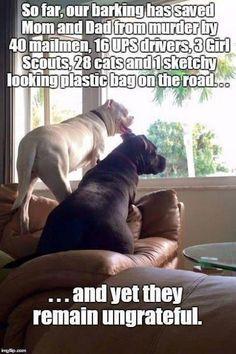 The Best Big Dog Memes. Lovely Animals World. humor 30 Of The Best Big Dog Memes Funny Dog Memes, Funny Animal Memes, Funny Animal Pictures, Cute Funny Animals, Funny Cute, Dog Pictures, Funny Dogs, Hilarious, Pets