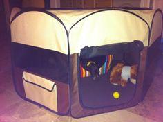 Mi perro tiene un Blog ! : Vida toledana :)