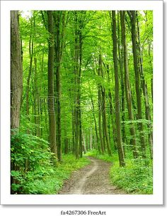 Sunset Forest Trees Nature Woods Landscape Large Poster /& Canvas Picture Print