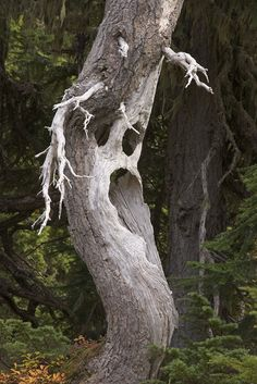 Ghostly Tree  By: Don Paulson