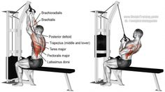 Great for lat development, the close neutral grip lat pull-down is easier on the wrists for many people than the close-grip overhand lat pull-down. 7 Workout, Cable Workout, Biceps Workout, Good Back Workouts, Back Exercises, Fun Workouts, Training Exercises, Fitness Gym, Body Fitness