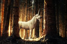 'the legendary unicorn' by BaukjeSpirit on deviantART