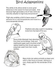 bird adaptations printable