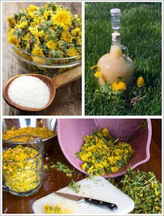 """Dandelion used; wine, tea jam etc.  A comment:"""" Another use: Make a strong tea with the flower heads, strain and let cool, soak a cloth in the tea, wring out and apply to sunburns. This takes out the heat and heals the burn."""""""