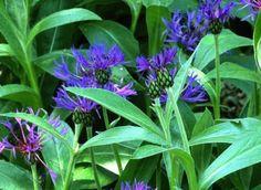 J. Lebret - Rustica Flowers, Gardening, Gardens, Sun, Plants, Blueberry, Potager Garden, Grasses, Green Ideas