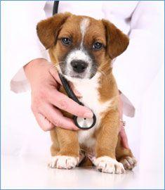 Produto / Material para clínica e consultório veterinário BioClassi