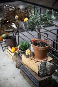 Planter Pots, Interior, Outdoor Decor, Photos, Home Decor, Pictures, Decoration Home, Indoor, Room Decor