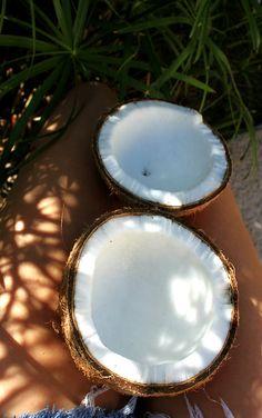 Coconut - Hawaii
