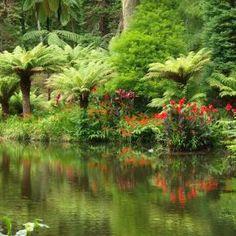 A park in Furnas, São Miguel, Azores, Portugal....