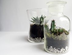DIY Créer son terrarium | Tukibomp