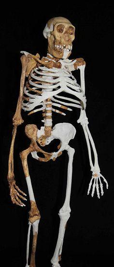 KeSimpulan | Laporan Penelitian: Australopithecus sediba Peralihan Homo