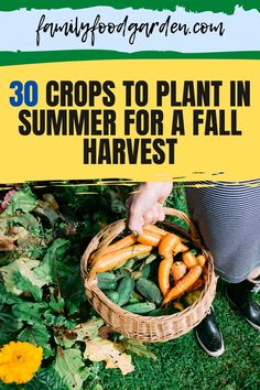 We've created a list of some crops to plant in summer for a fall harvest. Learn more about fall and winter gardening here. #gardening #gardeningtips #fallgardening #wintergardening Container Gardening, Gardening Tips, Indoor Gardening, Healthy Fruits And Vegetables, Autumn Garden, Garden Fun, Garden Seeds, Fall Harvest, Easy Cooking