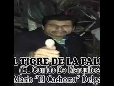 Corrido marquitos tigre de la palma | Humor Videos xD LOL