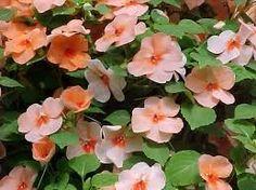 Λουλούδια με όμορφα άνθη | Top7news