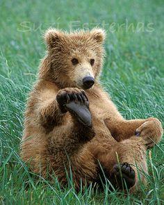 FUNNY BABY BEAR Photo  8 X 10 Print  Baby Animal by WildBabies, $25.00